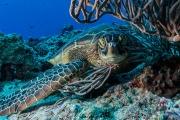 mr_turtle