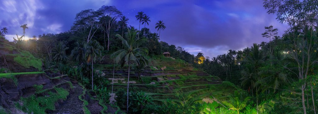 Panoramic Image Tegalalang Rice Terrace near Ubud, Bali