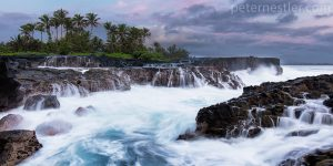 Hawaii Washtub Palms
