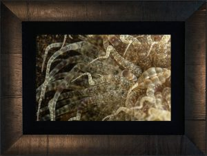 Tentacles Framed with hand made ROMA frame